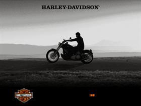 Harley heaven...