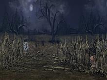 Haunted Corn Field