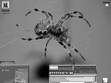 Wind Spider
