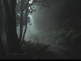 Anaga Forest
