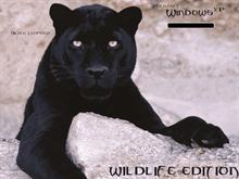 Windows Xp black leopard