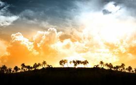 Palms View