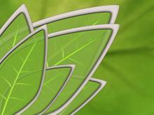 Harmony Leaf