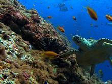 Sea Turtle