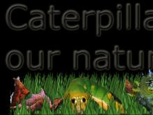 Caterplillar