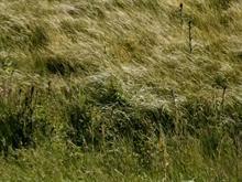 Windy Grassfield