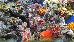 Colorful_Aquarium