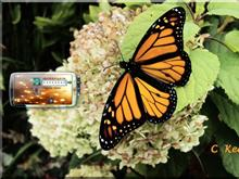 Carol's Butterfly