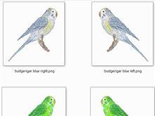 budgerigar icon