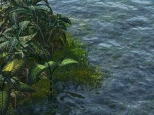 River Plants
