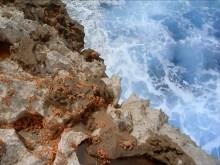 Crab Rock
