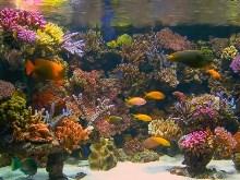 Aquarium 9