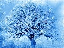Blue Ice Willow Logon