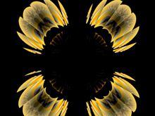 flower logon
