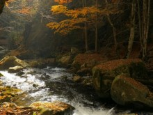 deep autumn forest stream