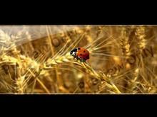 Vista Bug
