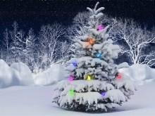 O Christmas Tree LV