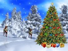 Wilderness Christmas Scene