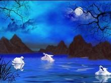 Moonlit Swans