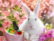 Easter_Time