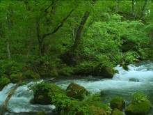 Green Forest River